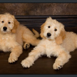 Business-Commercial-Pets-Knoxvill-Iowa-Photography-014