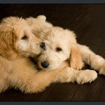 Business-Commercial-Pets-Knoxvill-Iowa-Photography-015