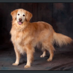 Business-Commercial-Pets-Knoxvill-Iowa-Photography-017