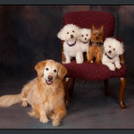 Business-Commercial-Pets-Knoxvill-Iowa-Photography-018