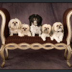 Business-Commercial-Pets-Knoxvill-Iowa-Photography-019