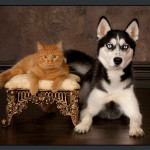 Business-Commercial-Pets-Knoxvill-Iowa-Photography-020